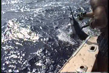 Hawaii fishing charter videos in Kona Hawaii
