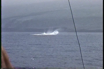 Hawaii deep sea fishing videos on the charter boat Humdinger in Kona Hawaii