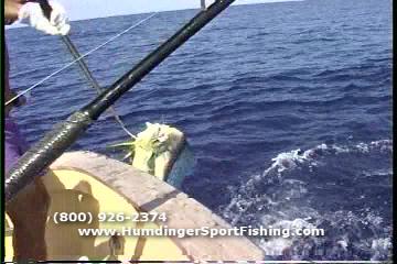 Kona charters - Hawaii fishing videos on the Kona Charter Boat Humdinger