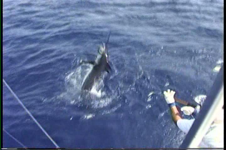 kona hawaii fishing videos on the kona charter boat humdinger with captain jeff fay and henry chee