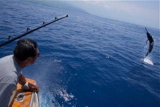 Marlin fishing report for kona for Hawaiian moon fish