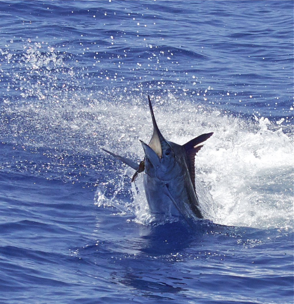 Hawaii fishing charter prices kona fishing packages for Kona fishing charters