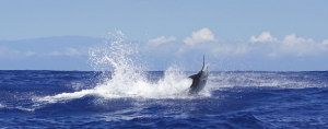 Sportfishing Kona Hawaii