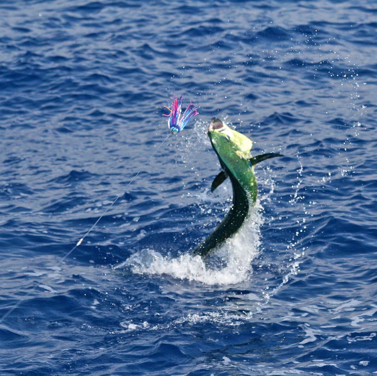 kona fly fishing