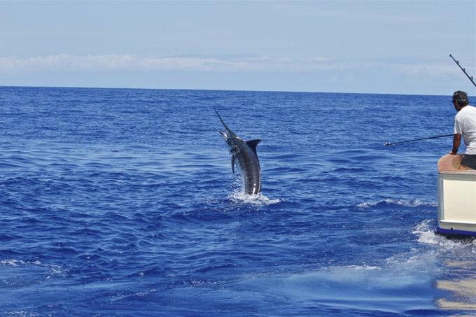 April 2015 fishing hawaii kona report for Kona sport fishing