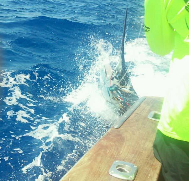 Hawaii kona fishing report june 2015 for Kona deep sea fishing