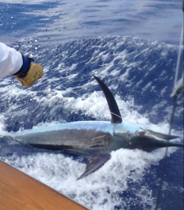 Things to do on the big island of hawaii for Kona hawaii fishing