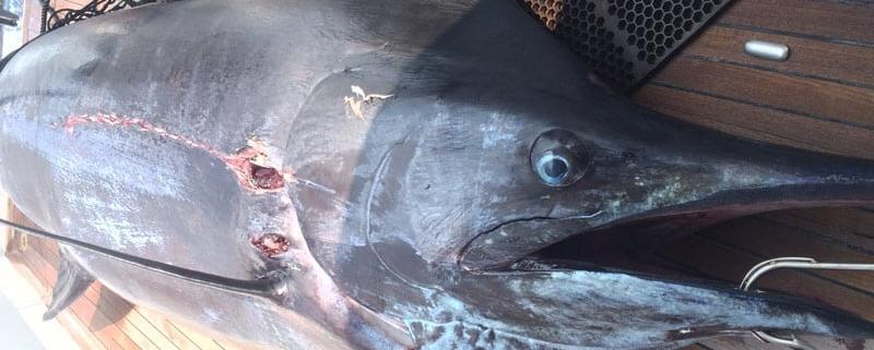 Report - Fishing Kona Hawaii September 2015