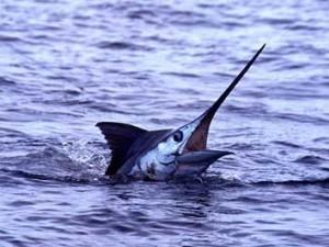 hawaii_fishing