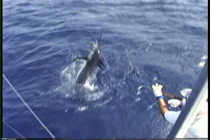 Hawaii fishing videos big marlin pulls off at the boat for Hawaii fishing charters