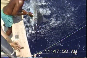 Angler Tags and Releases Her First Blue Marlin