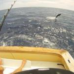 hawaii fishing charters kona