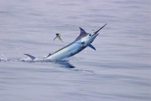 Kona Sportfishing Hawaii