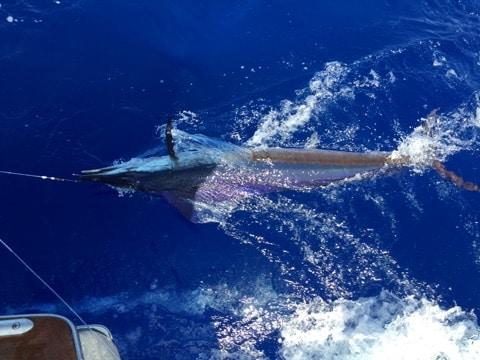 kona deep sea fishing