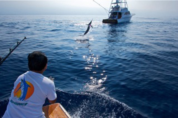February 2015 fishing report for Kona fishing charters