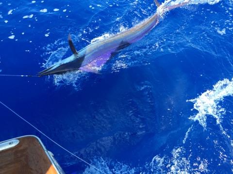 kon-fishing-report-2015-01