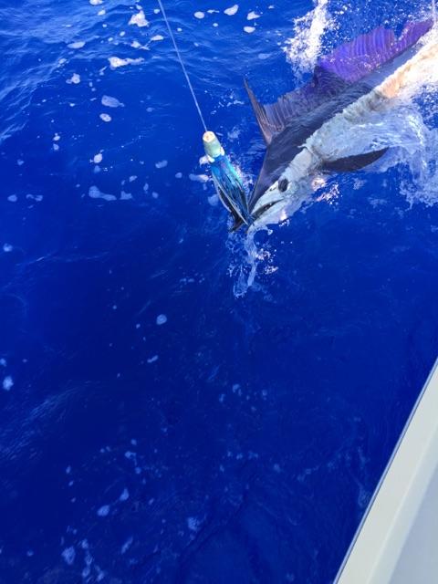 kon-fishing-report-2015-03
