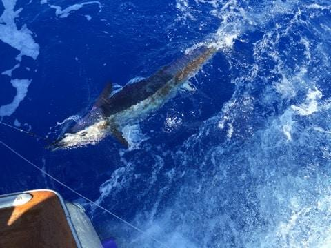 deep sea fishing kona hawaii