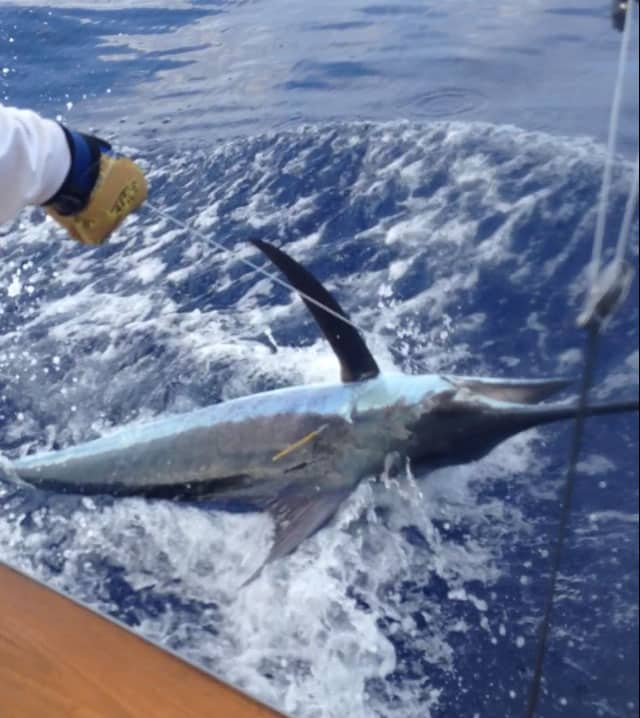 marlin fishing in kona