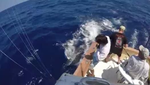 April 2016 kona deep sea fishing report for Kona deep sea fishing