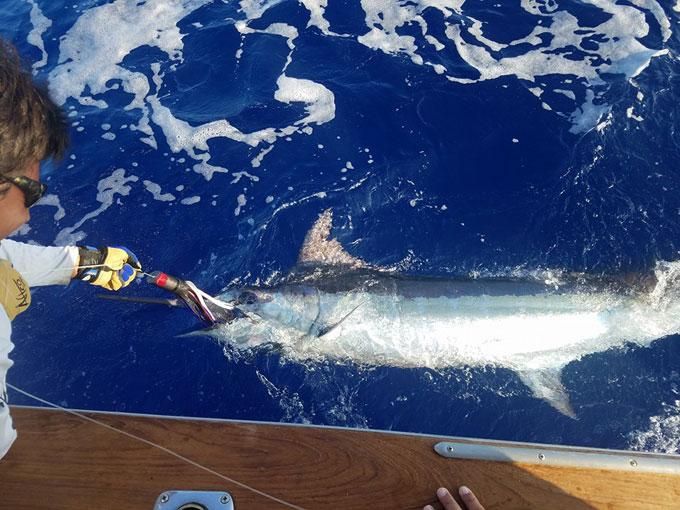 September 2016 fishing report in kailua kona hawaii for Kona sport fishing