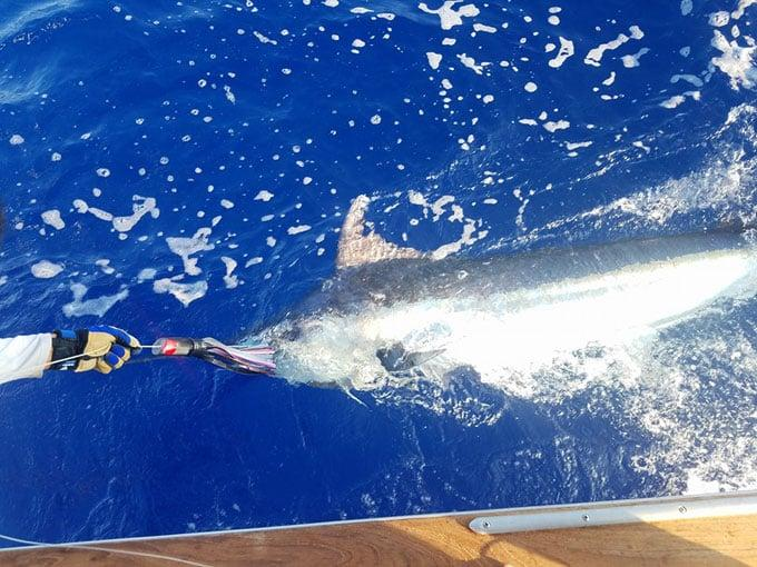 Kona Fishing Report – September 3, 2016 – Kailua-Kona, Hawaii