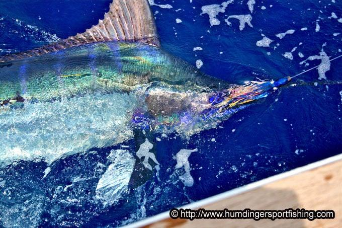 hawaii fishing report
