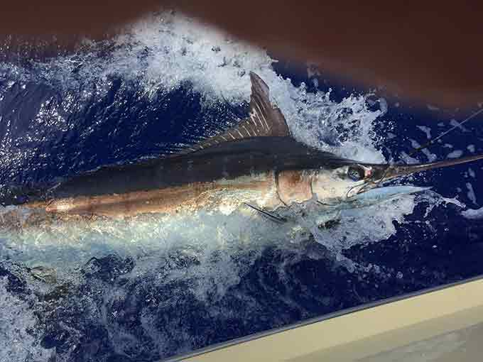 Kona Deep Sea Fishing Tip