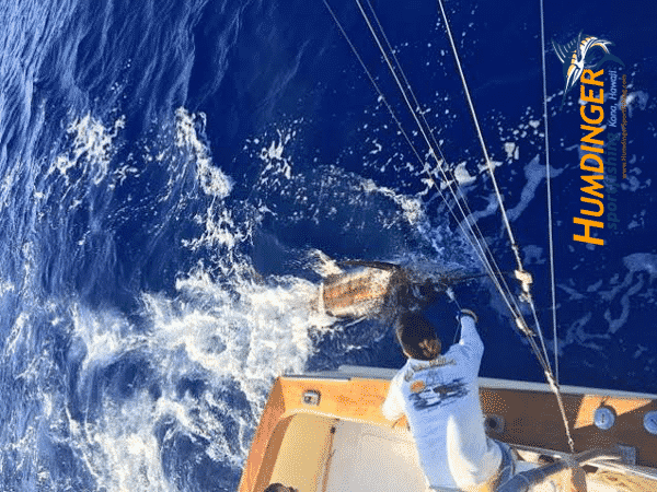 blue marlin fishing catch report 1