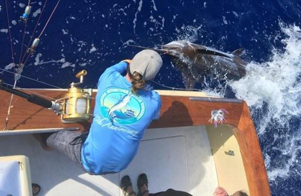 blue marlin fishing catch report 3