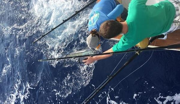 blue marlin fishing catch report 4