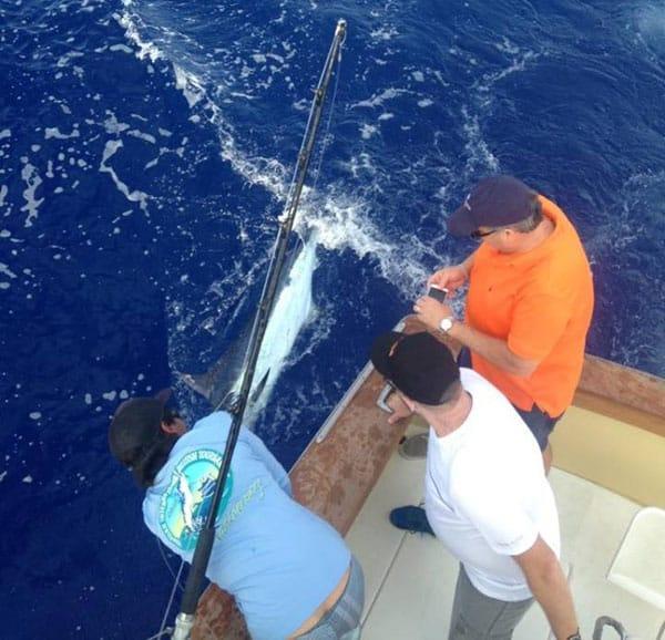 Kona fishing report december 31 2016 the big island for Kona deep sea fishing