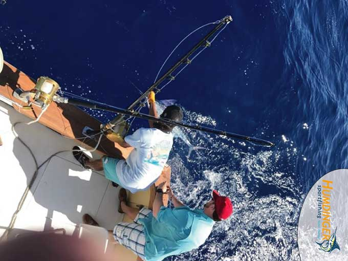 Striped Marlin Fishing Report - February 19, 2017