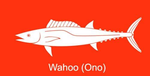 Wahoo-Ono